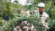 Góc nhìn trưa nay | Mãn nhãn với 40 giống cúc cổ quý hiếm tại Hà Nội