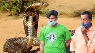 Video: Chuyên gia động vật hoang dã lãnh 2 án chung thân vì thả rắn độc cắn chết vợ