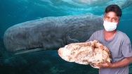 Video: Ngư dân nhặt được 'chất nôn của cá nhà táng' trị giá khoảng 1 triệu USD