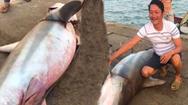 Video: Ngư dân Quảng Trị câu được cá mập nặng gần 1,5 tạ