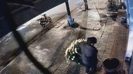 Video: Trộm cây kiểng 'xưa rồi', giờ tới nạn vứt hoa trộm chậu