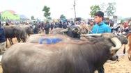 Video: Nhộn nhịp chợ trâu bò lớn nhất ở Nghệ An