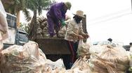Video: Củ cải, cà chua 1.000 đồng/kg vẫn phải bán còn hơn đổ đi