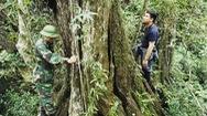 Góc nhìn trưa nay | Kỳ lạ rừng bách hơn 5 thế kỷ