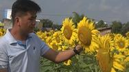 Góc nhìn trưa nay | Chàng kỹ sư nông nghiệp đưa hoa tam giác mạch về miền Tây