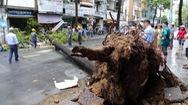 Video: Mưa trái mùa, cây ngã đè ôtô, xe máy ở trung tâm thành phố