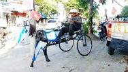 Video: 'Xe đạp ngựa' tự chế của ông lão nhặt phế liệu