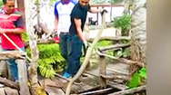 Video: Rắn hổ mang chúa 'núp' dưới bàn ăn của nhà hàng ở Thái Lan
