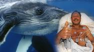 Video: Người lặn bắt tôm hùm bị cá voi lưng gù nuốt vào miệng nhưng thoát chết
