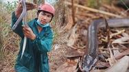 Góc nhìn trưa nay | Mưu sinh bằng nghề bẫy rắn ở miền Tây