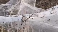Video: Mạng nhện khổng lồ bao phủ vùng ngoại ô ở Australia