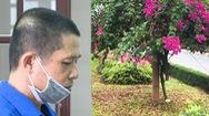 Video: Vụ cưa trộm 26 cây hoa giấy khiến dư luận bất bình, bị cáo lãnh 7 năm tù