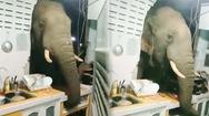 Video: Đứng tim khi phát hiện voi húc thủng tường, 'đột nhập' nhà bếp tìm thức ăn