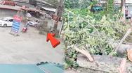 Video: Cành cây cổ thụ rơi đè bẹp chiếc bán tải, 4 người thoát chết