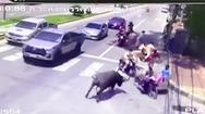 Video: Trâu 'điên' gây náo loạn trên đường phố Thái Lan