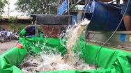 Video: 3 tấn cá ba sa tươi ngon từ miền Tây 'bơi' đến TP.HCM tiếp sức người lao động chống dịch