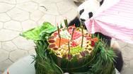Video: Gấu trúc lên 7 tuổi được nhân viên sở thú tổ chức sinh nhật