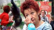 Video: Một người phụ nữ bị cấm đến vườn thú vì thừa nhận 'có quan hệ tình cảm với tinh tinh'