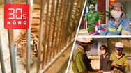 Bản tin 30s Nóng: Nuôi lén 17 con hổ lớn; Tặng xe máy cho công nhân bị cướp; Tổ 363 đưa người về nhà