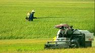 Góc nhìn trưa nay | Tổ xung kích giúp nông dân trên mọi mặt trận sản xuất