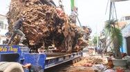 Video: Di dời cây đa 200 tuổi nặng trên 120 tấn, được xem là biểu tượng của Quảng Ngãi