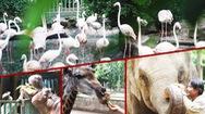 Góc nhìn trưa nay | Chăm sóc động vật tại Thảo Cầm Viên trong mùa dịch COVID-19