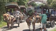 Tin nóng 24G: Cứ thả hay quản chặt xe ngựa du lịch?