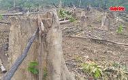 Nghệ An: Đề nghị cách chức Trưởng ban tuyên giáo huyện vì phá rừng