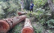 Cách chức trưởng ban tuyên giáo huyện chuyển đổi rừng trái phép