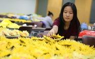 Dời ngày hội Hoa hướng dương tại TP.HCM đến ngày 2-12
