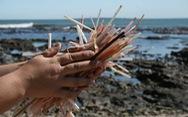 Ống hút nhựa hủy hoại môi trường của chúng ta thế nào?