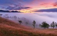 Ngủ đêm giữa rừng để ngắm cỏ hồng lúc bình minh