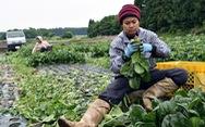 Lao động Việt Nam tại Nhật có thể nhận nhiều ưu đãi