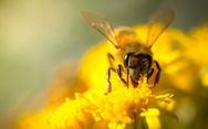 Cây cối cũng biết nghe tiếng côn trùng?