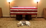 Những điều cảm động về chú chó của cố Tổng thống Bush 'cha' mà có thể bạn chưa biết