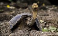 Phát hiện bí quyết sống lâu của con rùa 100 tuổi