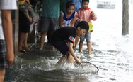 Sau mưa, dân Đà Nẵng nô nức ra đường bắt cá