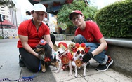 Lễ hội cún cưng mừng tết Mậu Tuất tại Singapore