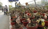 Sài Gòn nhộn nhịp những chợ mai Tết
