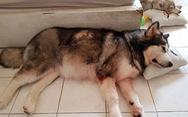Trợ lý HLV Park hỗ trợ gia đình chú chó cứu chủ vụ cháy Carina