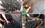 Xét xử 5 bị cáo 'trộn hỗn hợp pin vào trộn tiêu'