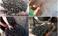 Khởi tố vụ án vỏ cà phê nhuộm pin tại Đắk Nông, tạm giữ 6 người