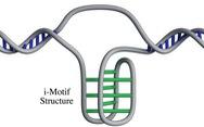 Phát hiện cấu trúc gene mới trong tế bào người