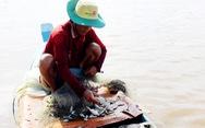 Người Việt giỏi nghề cá