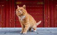 Fan Trung Quốc đau buồn vì tiên tri World Cup mèo hoàng đế qua đời