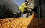 Nhựa sinh học - 'vàng xanh' của Mexico
