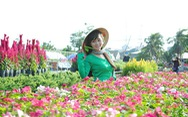 Làng hoa Sa Đéc hấp dẫn hơn khi thu phí?