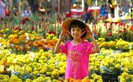 Tết về thấy thương một loài hoa vàng nắng