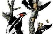 Những cái tổ giả cho chim gõ kiến