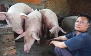 Năm Hợi, xem làng La Phù nuôi ông lợn lễ